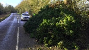 Fenland police tweeted this picture of a tree down