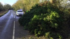 Trees toppled across the region as wind strengthens