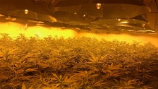 'Enormous' cannabis factory found in nuclear bunker