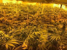 Thousands of cannabis plants found at nuclear bunker