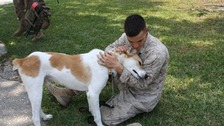 The charity reuniting soldiers with the rescue dogs of war