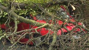 Van trapped under tree