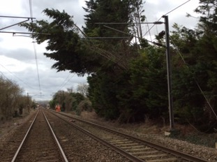 A tree across the power lines at Meldreth in Cambridgeshire.