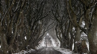 Iconic Game of Thrones tree tunnel Dark Hedges damaged by Storm Doris