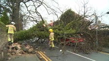 Fallen trees were just some of the incidents dealt with