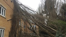 A tree was felled into flats in Wisbech in Cambridgeshire.