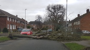 A tree brought down by Storm Doris in Lowestoft, Suffolk.
