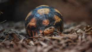 The four tortoises were rescued from smugglers