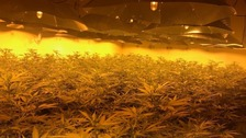 Three charged following discovery of cannabis factory