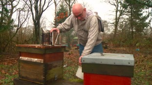 Building a buzz to boost indigenous Welsh bees