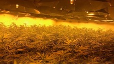 Three charged with slavery offences after cannabis factory discovered in Wiltshire