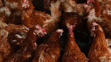 Bird flu outbreak at Northumberland farm