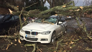 Woman's miracle escape as tree crashes onto car during Storm Doris