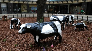 Created in 1978 by artist Liz Leyh, the cows were once cynically said to symbolise a new town consisting entirely of concrete