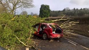 Elderly man dies in hospital after tree hits car during Storm Doris