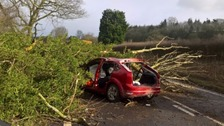 Two pensioners were in the car when it was hit by a falling tree