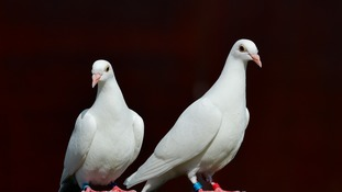 Man disqualified from keeping animals after killing dove