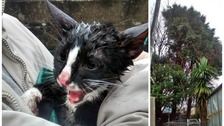 Kitten rescued after being stuck up a tree during Storm Doris