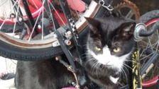 Unlucky cat saved after becoming entangled in bike