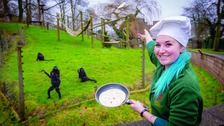 Monkeys enjoy Shrove Tuesday at the zoo