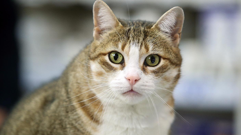 Thiamine Deficiency In Cat Food