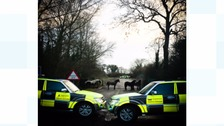 Highways England traffic officers protect the horses in a nearby field after escorting them from the carriageway
