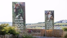 Charity urges zoo license refusal after animal deaths