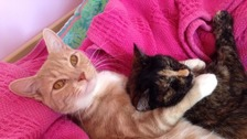 Lolly and Bo the cats who died after ingesting antifreeze