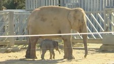 All four of the asian elephants at Twycross will be moved