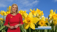 Wales Weather: Outbreaks of rain this St David's Day, turning windy