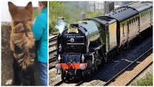 Tornado steam train: not just people train-spotting