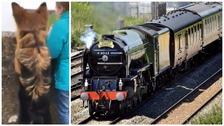 Tornado steam train: not just people train-spotting