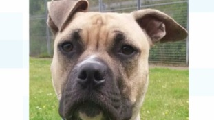 Tyson was beaten with a belt by his previous owner