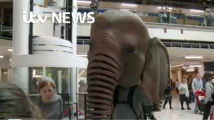 Oona the elephant thrills children at Meadowhall