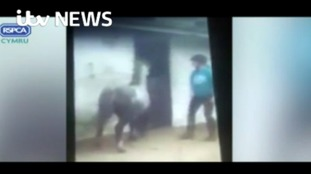 Horse riders banned from keeping animals over pony whipping video