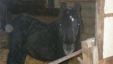 An emaciated mare and foal were kept in the dark for more than 18 months.