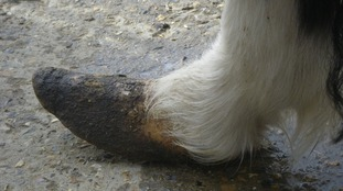 The neglected ponies had lice and other parasites and had overgrown hooves.