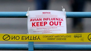 55,000 birds will be culled after bird flu was found at a second farm in Redgrave.