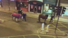The horses being led to safety by police