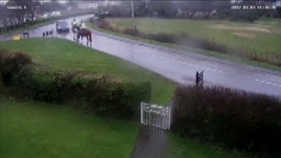 The moments before a collision between two horses and a car in Cambridgeshire