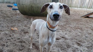 Harry Potter house-elf lookalike searching for a home