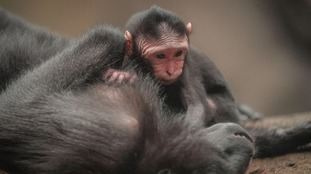 Rare monkey arrives at North West zoo