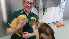 Staff at Dogs Trust Shrewsbury have found themselves looking after an unusual four-legged friend