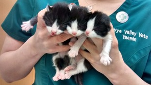 Week old kittens 'heartlessly' abandoned in park