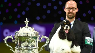 American Cocker Spaniel takes top prize at Crufts