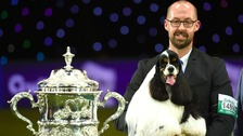 Afterglow Miami was crowned Best In Show at Crufts