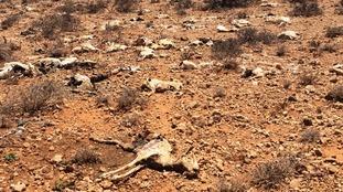 The looming famine threat has been described as 'unprecedented'