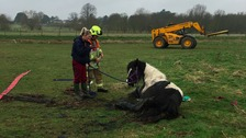 The horse returned to a nearby field after the rescue operation.