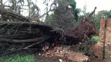 A woman died after this tree in Western Way fell last night.