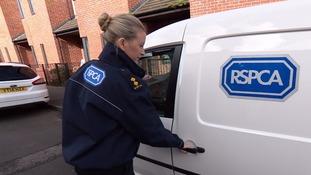 RSPCA officer